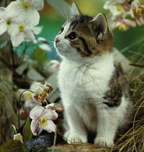 les chats!! 9lizasyn