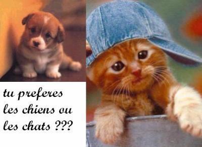 question reponse images!!! Pz6utxxv